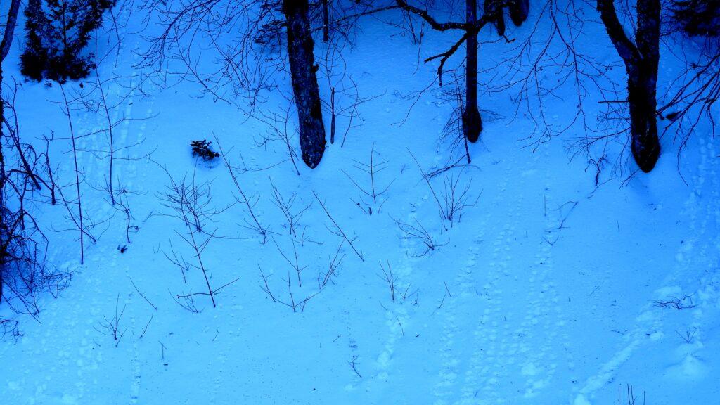 animal steps to mountain